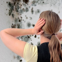 Antifungal agent for walls: a comparative overview of the best options