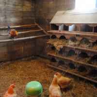 DIY ventilācija vistas mājā ziemā: labākās shēmas un sakārtotības smalkumi