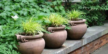 Pots for experiment