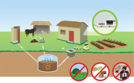 Obtaining biogas from manure