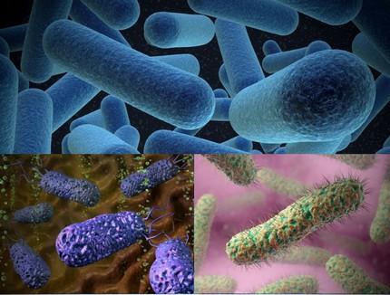 Organic organisms