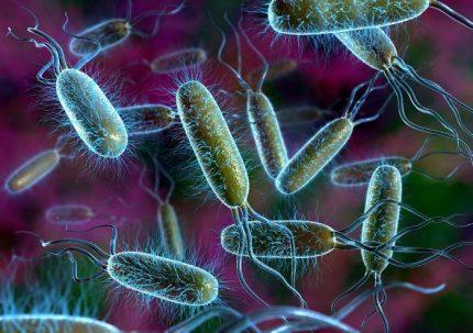Bakterijų funkcijos
