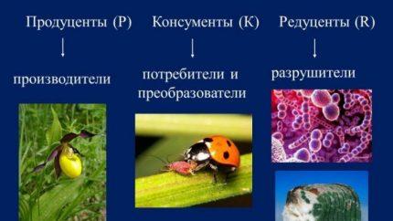 Ecosystem members
