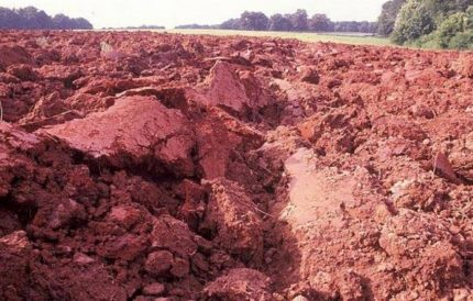 Clay type soil