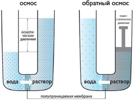 Modèle de laboratoire d'osmose