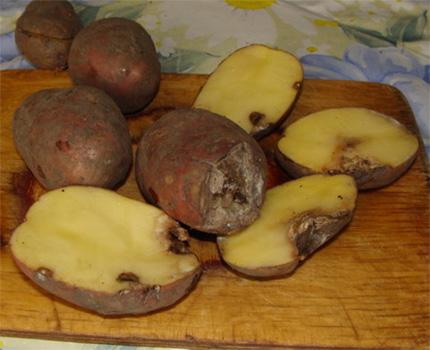 Kind of frozen potatoes