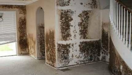 Drywall un pelējums