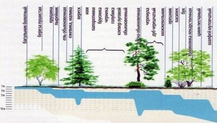 Groundwater Depth Determination