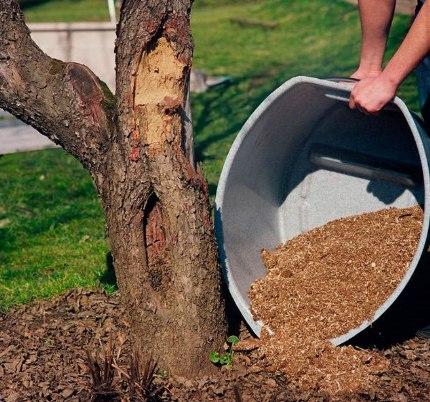 Rotting Peat - A Great Fertilizer