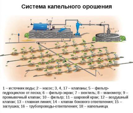 Lašelinės laistymo sistemos schema