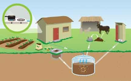 Biofuel from manure
