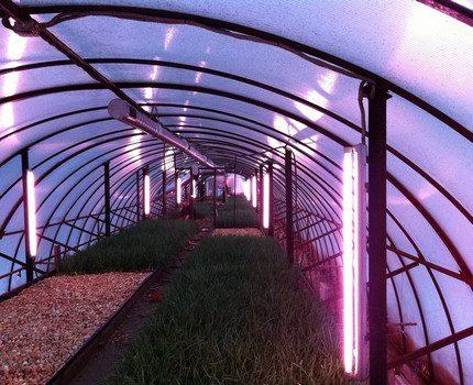 Greenhouse fluorescent lighting