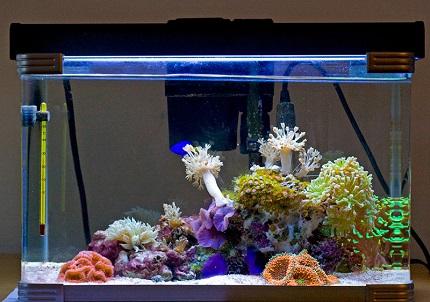 Rétro-éclairage d'aquarium