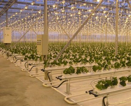 Greenhouse lighting with sodium lamps DNAZ