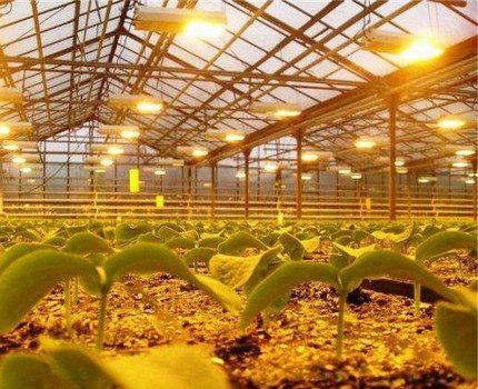 Sodium lamps for lighting greenhouses