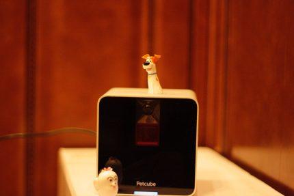 """Petcube"" interaktyvi kamera"