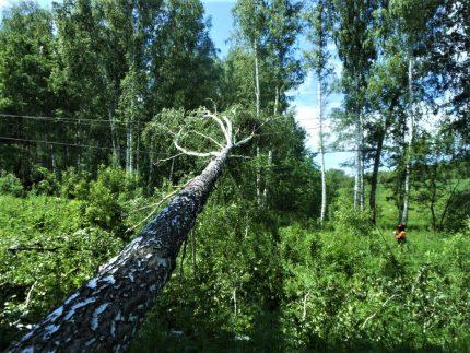 Lignes électriques endommagées par les arbres