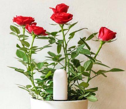 Humidity sensor for flowers