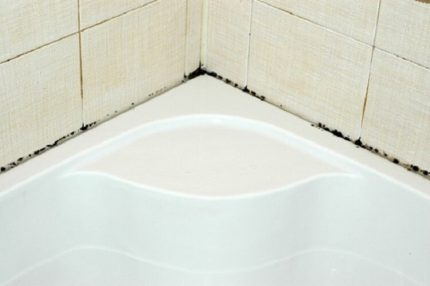 Mold in the bathroom