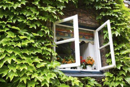 Ventilation naturelle par une fenêtre ouverte